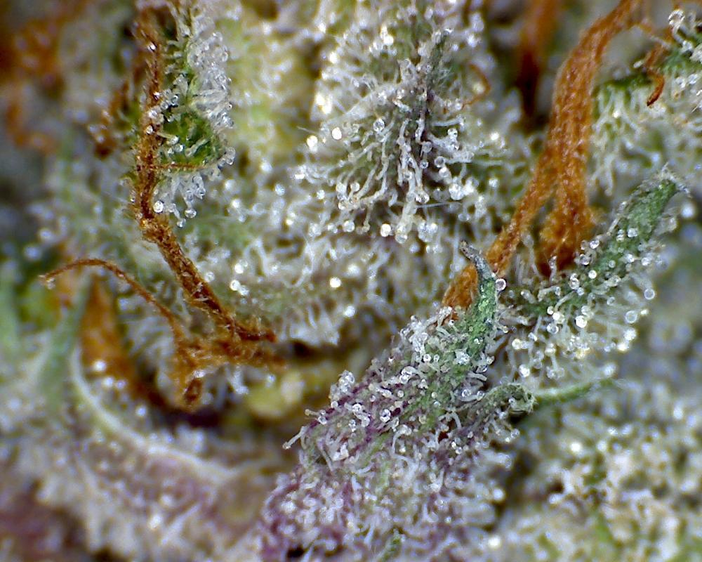 God Bud by Canna Montana, a medical cannabis dispensary in Bozeman, MT